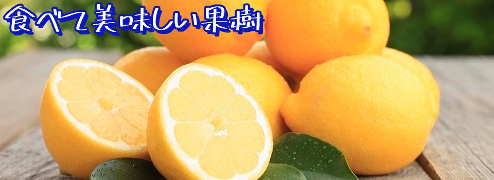 秋野菜果樹即納